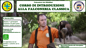Falconeria corso di introduzione @ Sibillini Adventure | Umbria | Italia